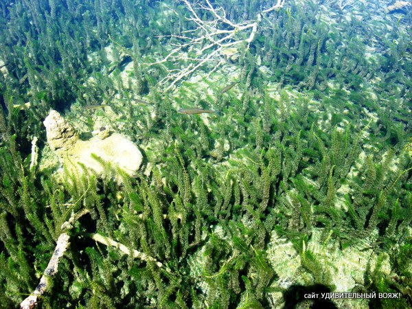 Подводный мир Плитвицких озер