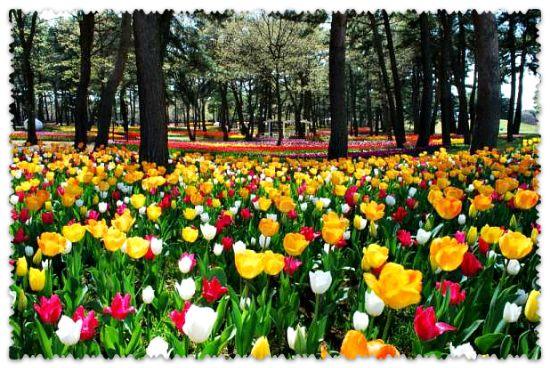 парк Хитачи