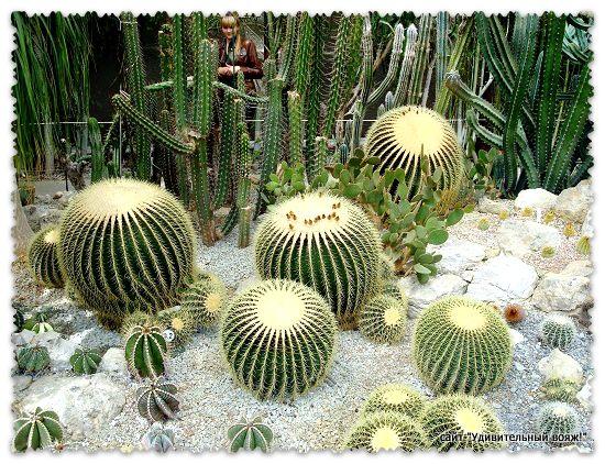 Оранжерея кактусов в ботаническом саду