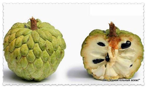 Сахарное яблоко (Аннона)