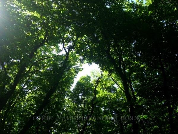 Леса Крыма
