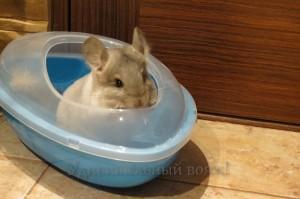 Как сделать ванночку для шиншиллы