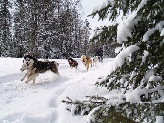 в Карелию на зимний отдых
