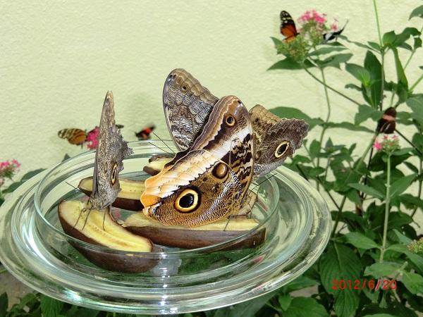павильон Бабочек, на острове Майнау