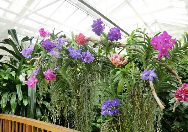в павильоне Бабочек на острове Майнау