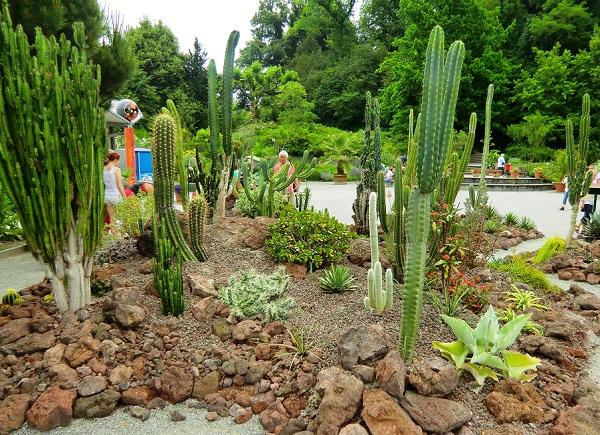 кактусы в парке Майнау