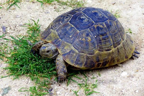 черепахи в Каппадокии