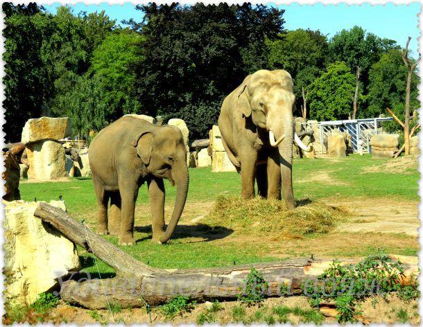 Prazhskij zoopark 11