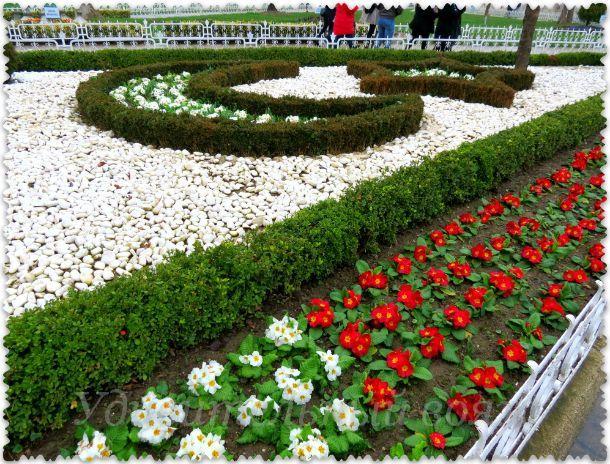 цветение в Стамбуле