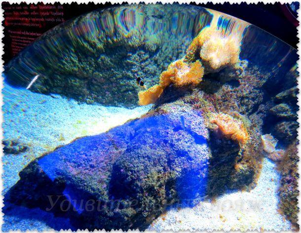 аквариум с оптическим стеклом