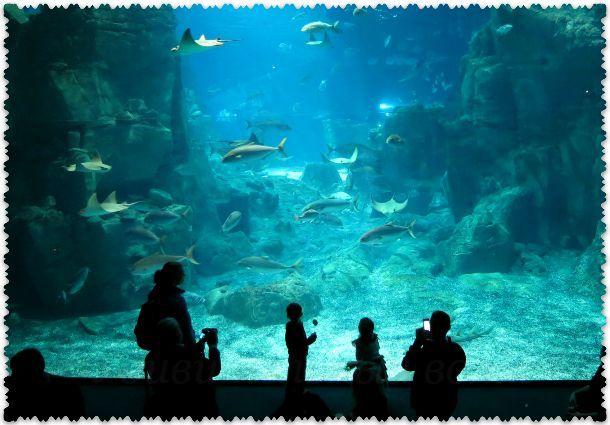 Стамбульский аквариум Флория