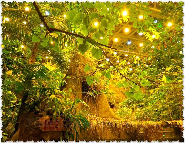 тропический лес Амазонки - Amazon Rainforest