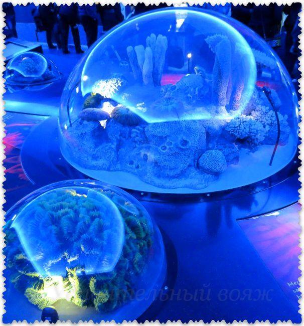 Stambul'skij akvarium v rajone Florija