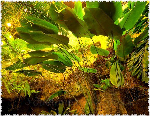 Stambul'skij akvarium