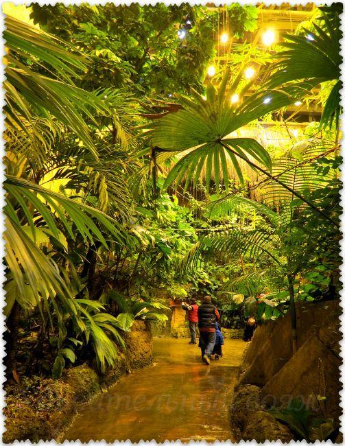 tropiki v akvariume Stambula