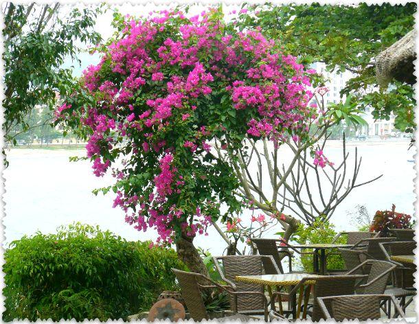 весна во Вьетнаме