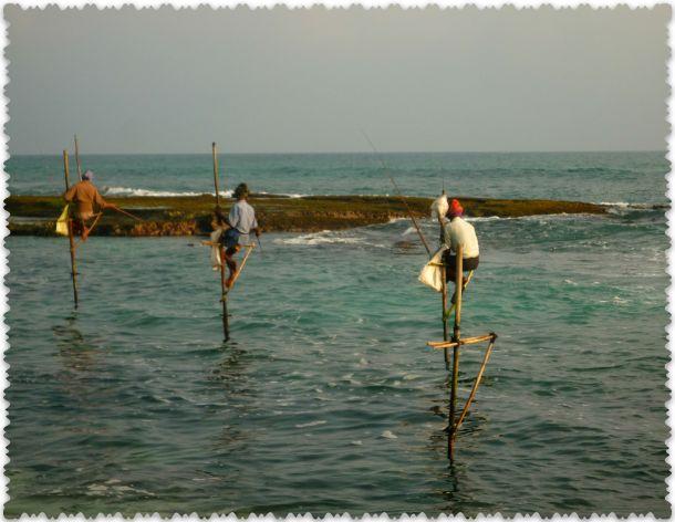 jekskursii v Shri-Lanke