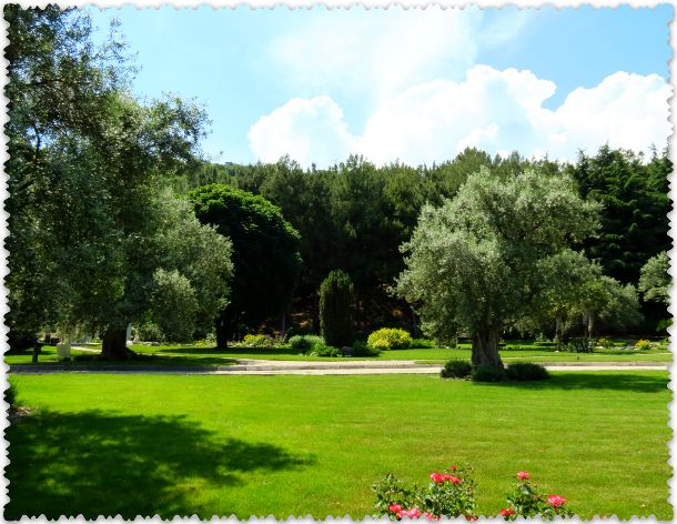 olivkovaja roshha v parke Paradiz
