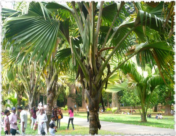 поездка в Шри - Ланку