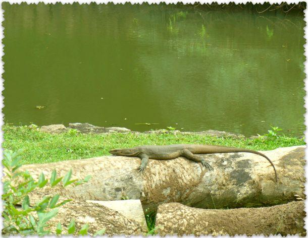 v Shri-Lanke