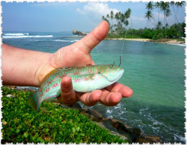 Поймали рыбку
