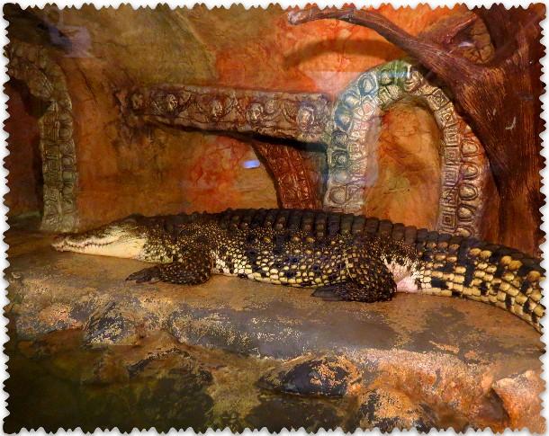krokodilovaja ferma v Jalte