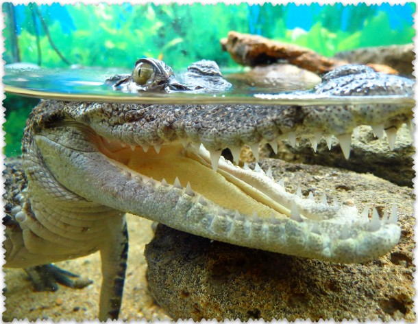 Jaltinskij krokodiljarium