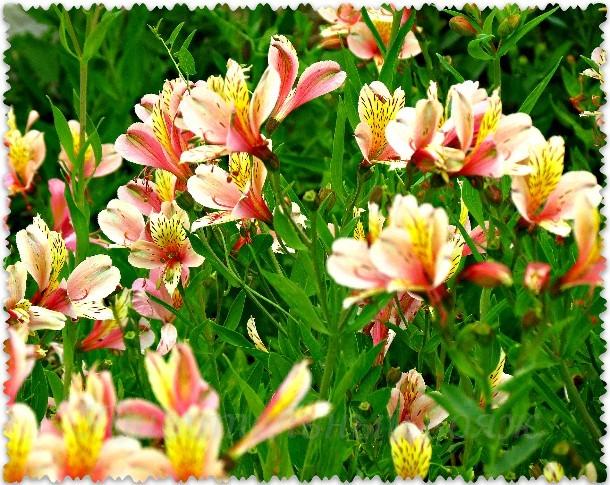 dikaja orhideja v Nikitskom botanicheskom sadu
