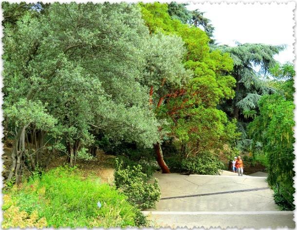 Nikitskij botanicheskij sad v Krymu