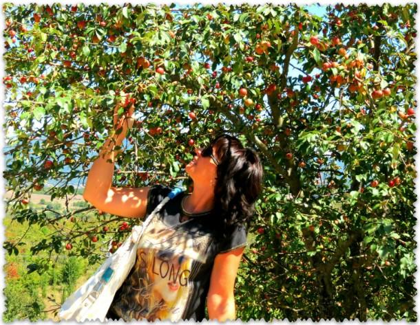 dikie jabloki v lesah Kryma