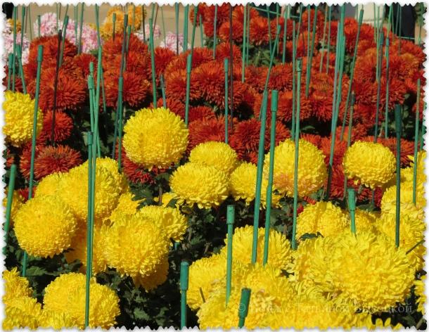 osen' v Nikitskom botanicheskom sadu