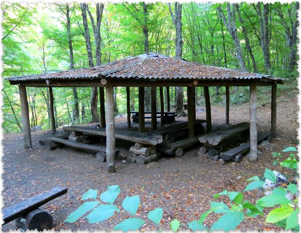 piknik v krymskom lesu