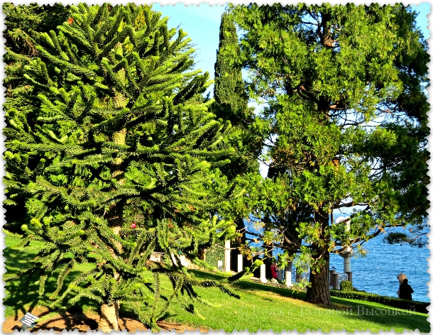 pejzazhnyj sad v parke Ajvazovskoe