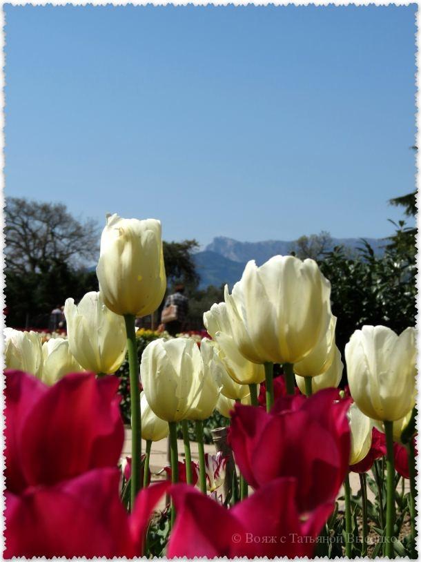 цветение в Крыму