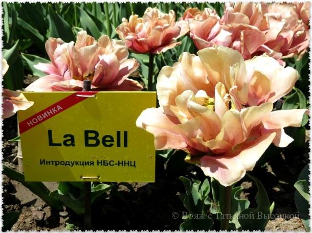 тюльпан La Bell