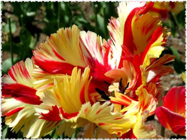 vystavka cvetov v Nikitskom botanicheskom sadu