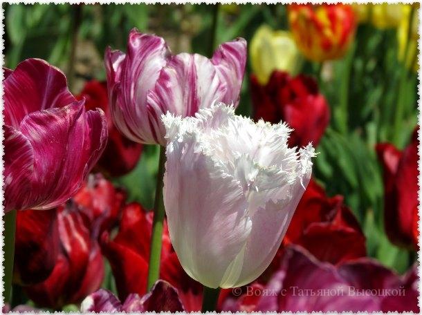 vystavka cvetov v Krymu