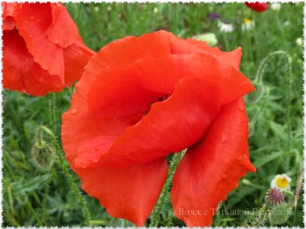 Majskoe cvetenie v poljah Kryma