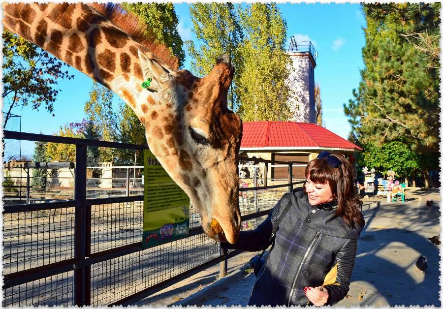 """жирафы в парке """"Тайган"""""""