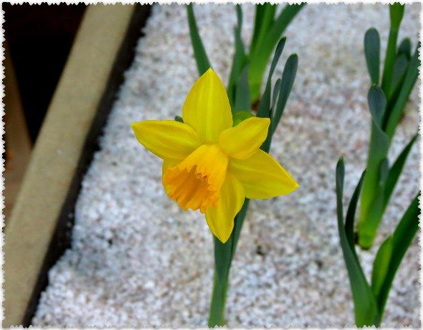 cvety v oranzherei Caricyno