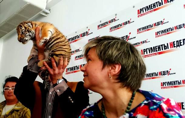 амурский тигренок в зоопарке Сказка