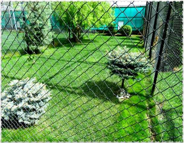 вольеры для птиц в парке Тайган