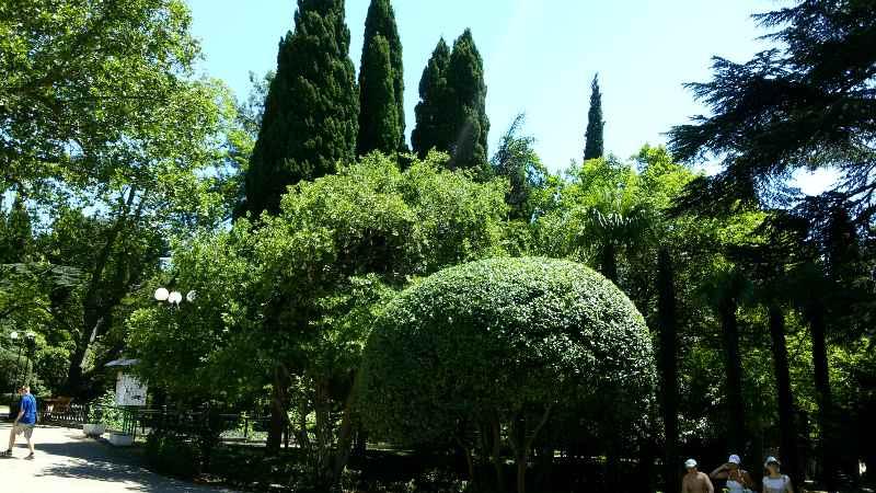 деревья в Гурзуфском парке