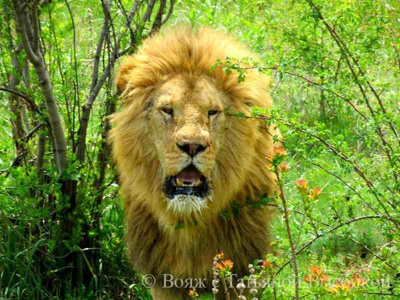 vypusk l'vov v safari parka «Tajgan»