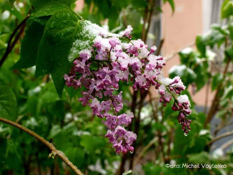 cvetenie v Krymu v aprele