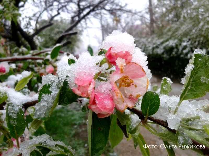 cvetushhij Krym v aprele