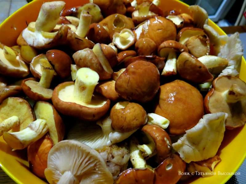 Какие съедобные грибы собирают люди осенью: список, фото, названия. Какие съедобные грибы собирают в сентябре, октябре, ноябре? Как быстро растут грибы после дождя осенью?