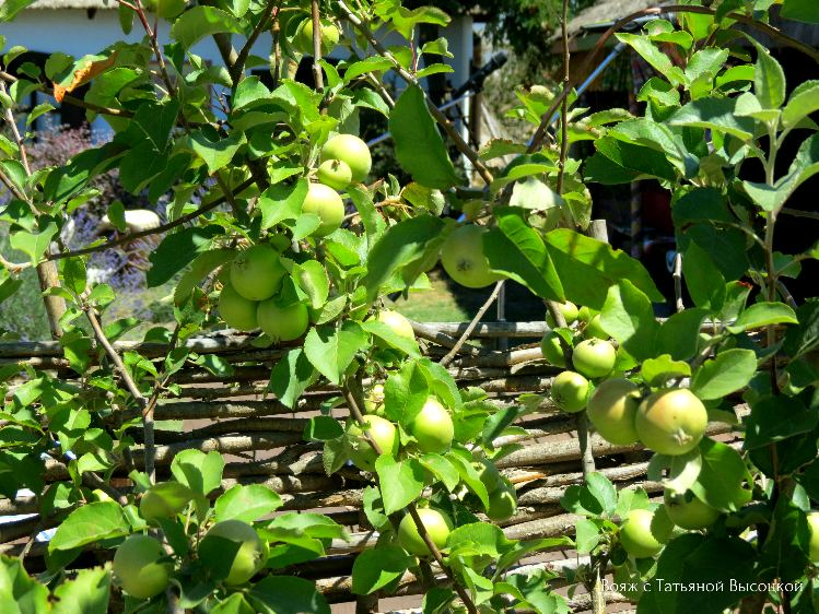 frukty-v-stanice-ataman