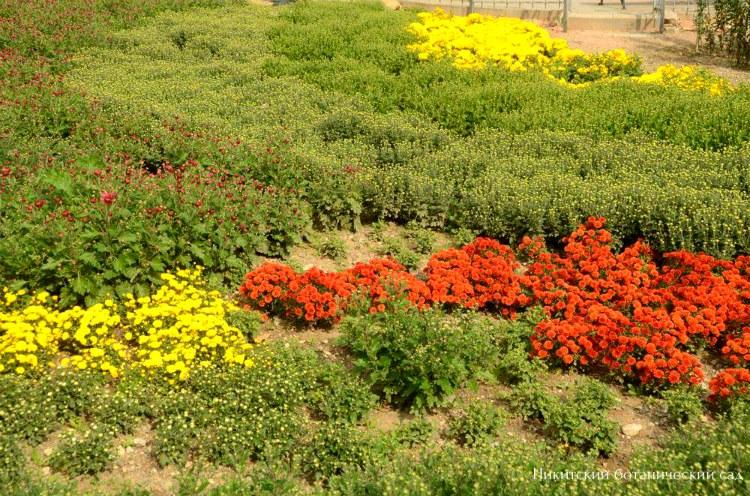nikitskij-botanicheskij-sad-v-oktyabre