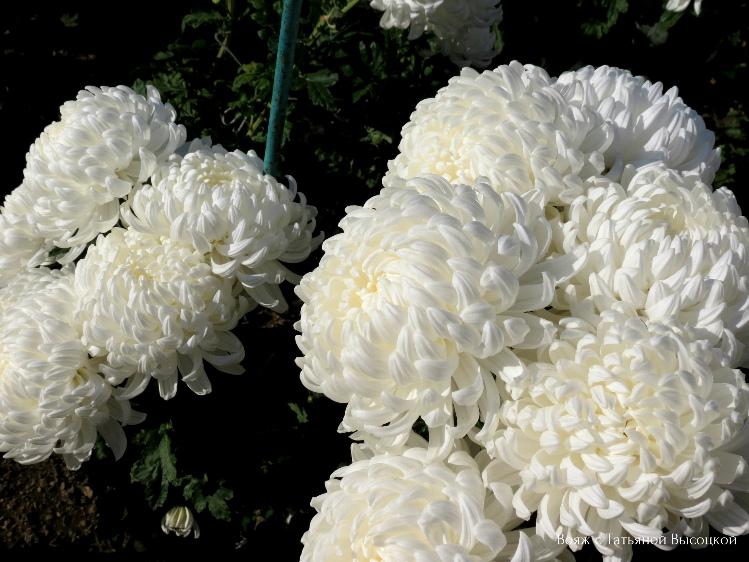 vystavka-cvetov-v-krymu-2018